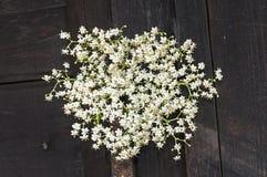 Flores blancas del manojo del Sambucus, arbusto verde de las hojas Fotografía de archivo libre de regalías