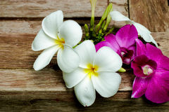 Flores blancas del plumeria y de la orquídea Imagen de archivo libre de regalías
