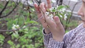 Flores blancas del preadolescente que huelen de una cereza del muchacho cauc?sico en el jard?n de la primavera metrajes