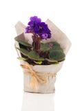 Flores blancas del Saintpaulia en el empaquetado de papel Imagenes de archivo