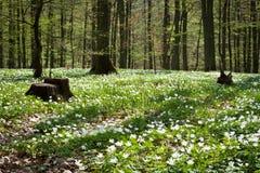 Flores blancas del saltador Imagen de archivo