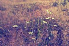 Flores blancas del verano Imágenes de archivo libres de regalías