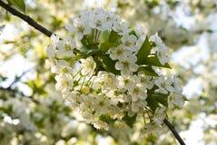 Flores blancas en banch Imagenes de archivo