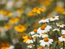 Flores blancas en cama de flores Fotos de archivo libres de regalías