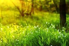 Flores blancas en el bosque Fotografía de archivo libre de regalías