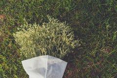 Flores blancas en el campo de hierba Imágenes de archivo libres de regalías