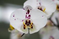 Flores blancas en el jardín Fotos de archivo