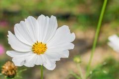 Flores blancas en el parque fotografía de archivo
