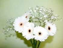 Flores blancas en florero Imagen de archivo libre de regalías