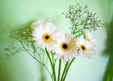 Flores blancas en florero Foto de archivo libre de regalías