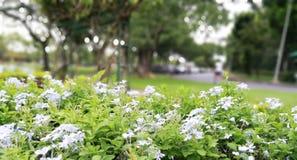 Flores blancas en fondo borroso y del bokeh imágenes de archivo libres de regalías