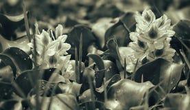 Flores blancas en jardín imagen de archivo libre de regalías