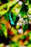 Flores blancas en la botella azul de la mariposa, brillante imagen de archivo libre de regalías