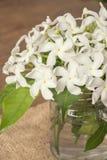 Flores blancas en la botella de cristal Fotos de archivo libres de regalías