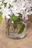 Flores blancas en la botella de cristal Foto de archivo libre de regalías