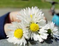 Flores. Blancas en la mano Stock Photo