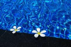 Flores blancas en la piscina Foto de archivo