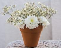 Flores blancas en pote Fotos de archivo