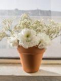 Flores blancas en pote Imagen de archivo libre de regalías