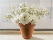 Flores blancas en pote anaranjado Fotografía de archivo libre de regalías