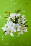 Flores blancas en un fondo verde Foto de archivo libre de regalías