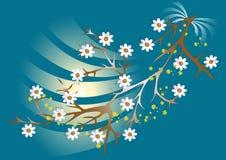 Flores blancas en una ramificación. Background.Wallpaper. Fotografía de archivo libre de regalías