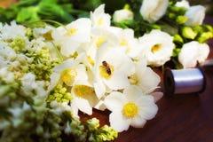 Flores blancas en una tabla de madera abeja, néctar de consumición de la avispa Imagen de archivo