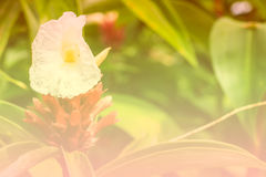 Flores blancas hermosas Fotografía de archivo libre de regalías