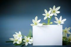 Flores blancas hermosas con un espacio en blanco Imagen de archivo