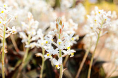 Flores blancas hermosas en el fondo del jardín Fotos de archivo libres de regalías