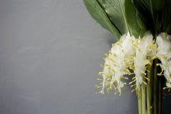 Flores blancas hermosas en fondo gris Fotos de archivo libres de regalías