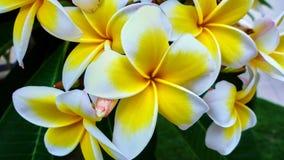 Flores blancas hermosas en un árbol Foto de archivo