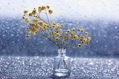 Flores blancas macras con el bokeh borroso en vida inm?vil imagen de archivo