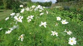 Flores blancas que se mueven con el viento almacen de video