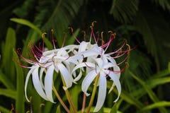 Flores blancas raras en un jardín botánico imagen de archivo libre de regalías
