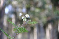 Flores blancas salvajes con el fondo defocused Foto de archivo
