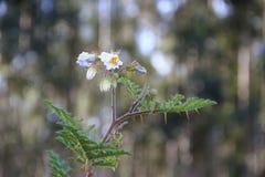 Flores blancas salvajes con el fondo defocused Imagenes de archivo