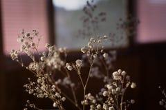 Flores blancas secas en ventana Imagen de archivo