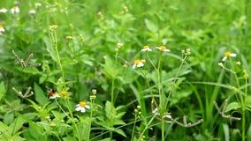 Flores blancas y abeja metrajes