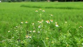Flores blancas y abeja almacen de video