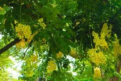 Flores blancas y amarillas hermosas en fondo de los parques del jardín del verano imágenes de archivo libres de regalías