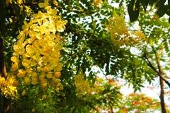 Flores blancas y amarillas hermosas en fondo de los parques del jardín del verano fotos de archivo libres de regalías