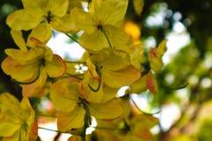 Flores blancas y amarillas hermosas en fondo de los parques del jardín del verano foto de archivo