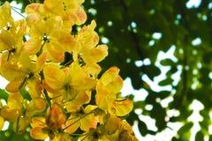 Flores blancas y amarillas hermosas en fondo de los parques del jardín del verano imagen de archivo