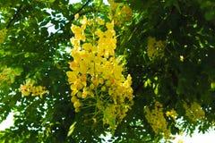 Flores blancas y amarillas hermosas en fondo de los parques del jardín del verano fotografía de archivo