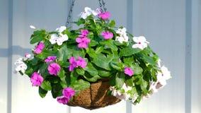 Flores blancas y púrpuras en una cesta colgante, moviéndose en la brisa en el pórtico almacen de metraje de vídeo