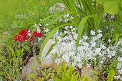 Flores blancas y rojas y diversas plantas en una colina rocosa en Imagen de archivo
