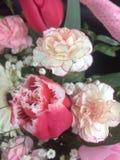 Flores blancas y rosadas imágenes de archivo libres de regalías