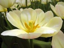 Flores blancas y rosadas Foto de archivo