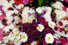 Flores blancas y rosadas de la maravilla Fotos de archivo